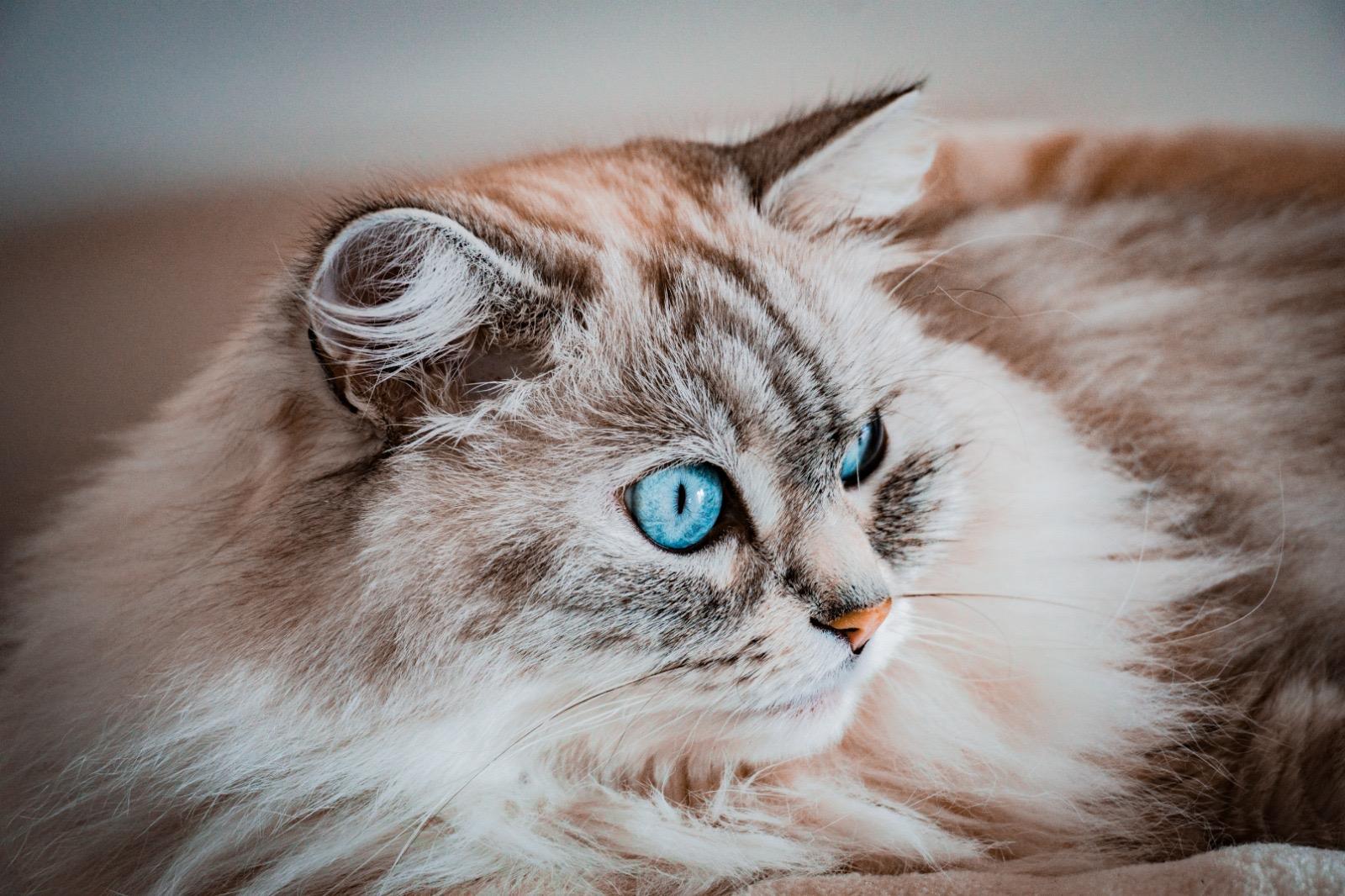 123 Moustaches, Comportementaliste Felin, Cat-sitting